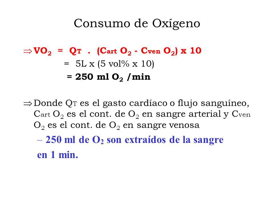 Consumo de Oxígeno 250 ml de O2 son extraídos de la sangre en 1 min.