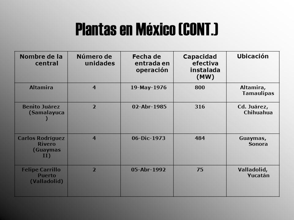 Plantas en México (CONT.)