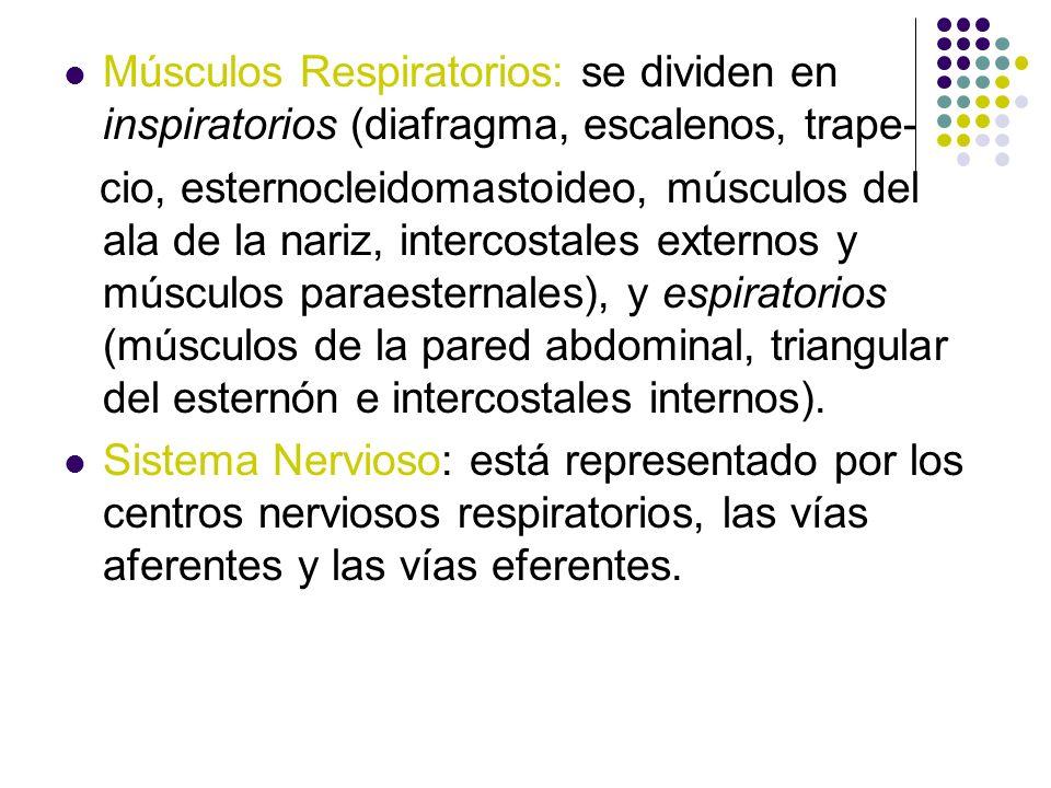 Músculos Respiratorios: se dividen en inspiratorios (diafragma, escalenos, trape-