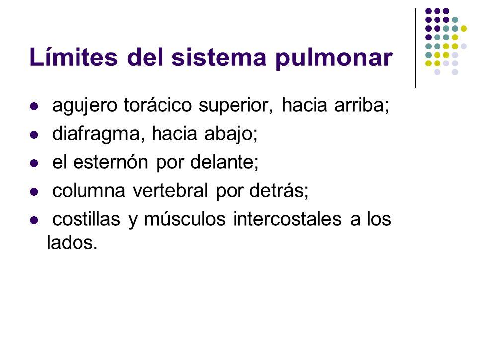 Límites del sistema pulmonar