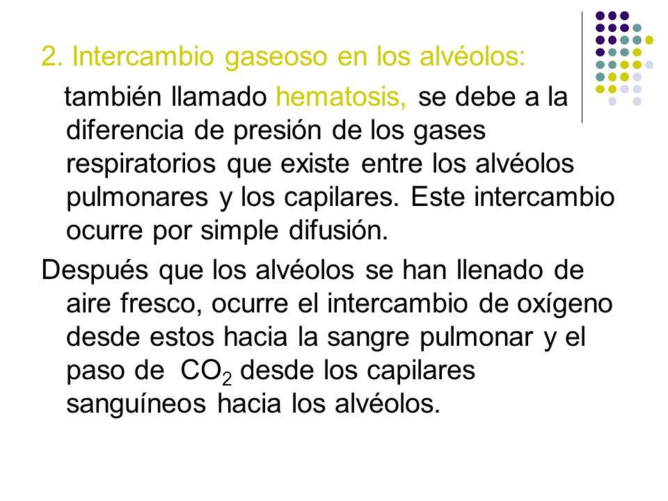2. Intercambio gaseoso en los alvéolos:
