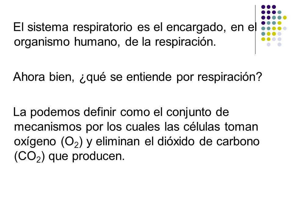 El sistema respiratorio es el encargado, en el organismo humano, de la respiración.