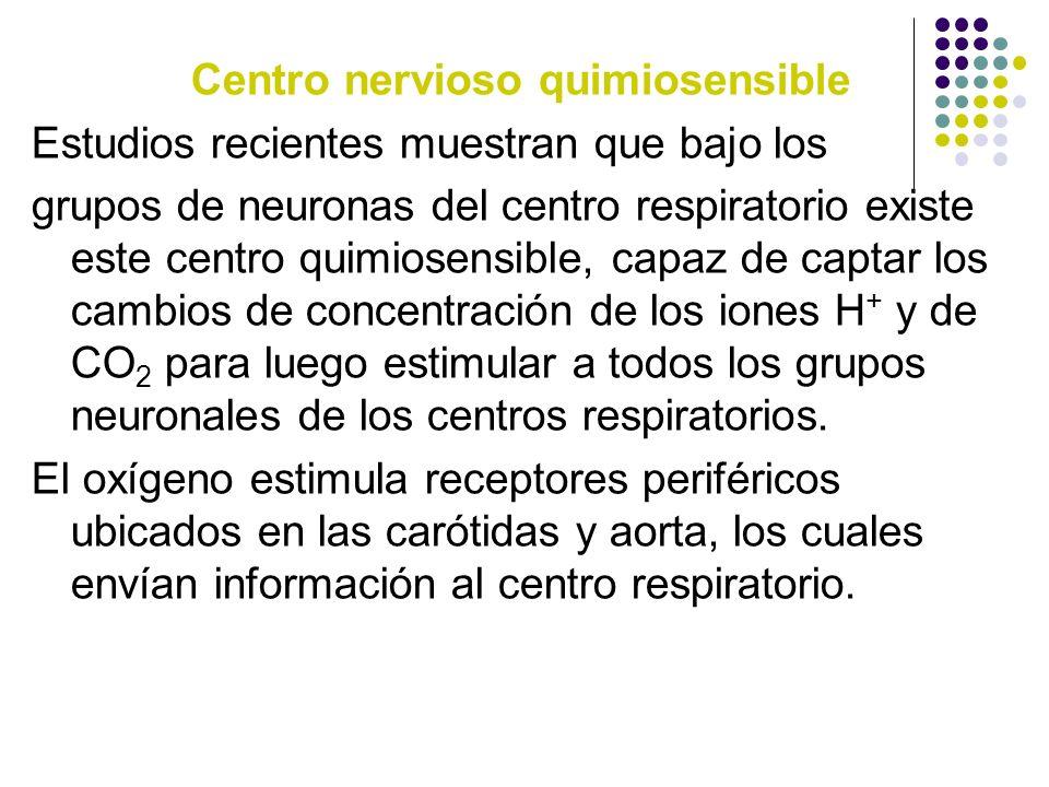Centro nervioso quimiosensible