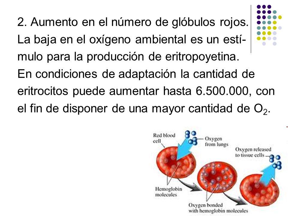 2. Aumento en el número de glóbulos rojos.