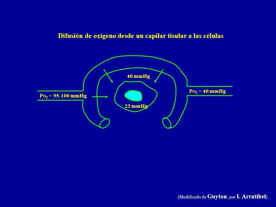 Difusión de oxígeno desde un capilar tisular a las células