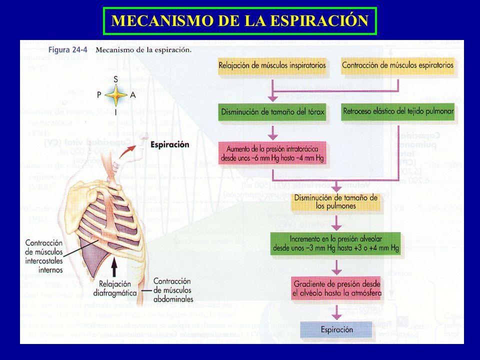 MECANISMO DE LA ESPIRACIÓN