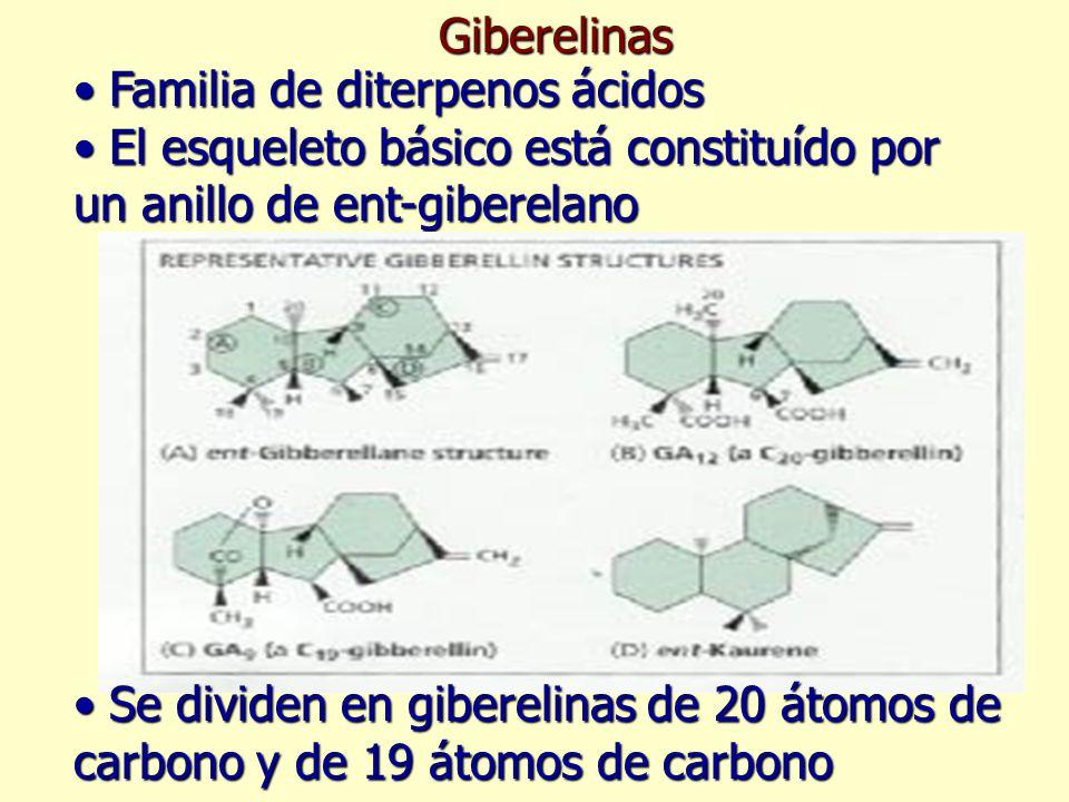 Giberelinas Familia de diterpenos ácidos. El esqueleto básico está constituído por un anillo de ent-giberelano.