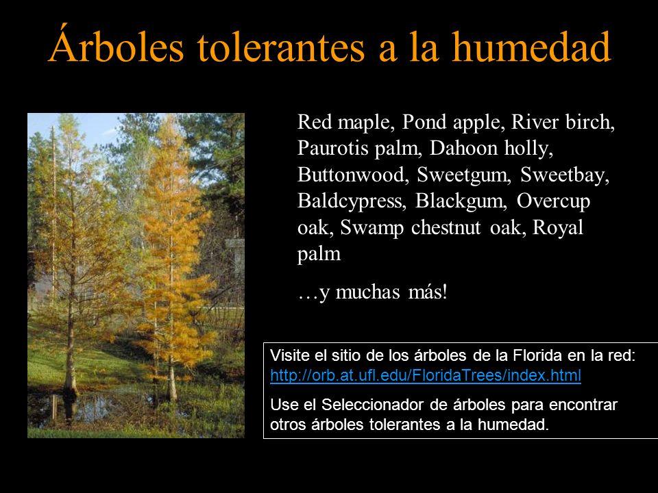 Árboles tolerantes a la humedad