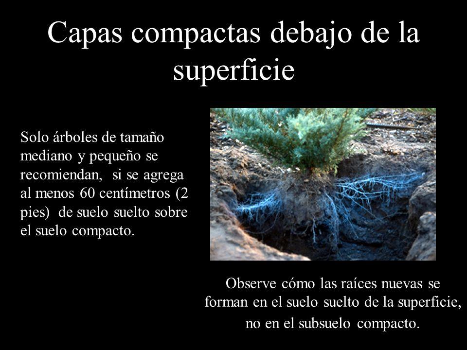 Capas compactas debajo de la superficie