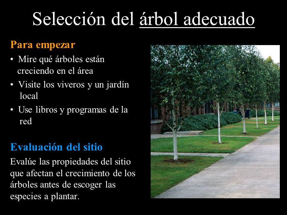 Selección del árbol adecuado