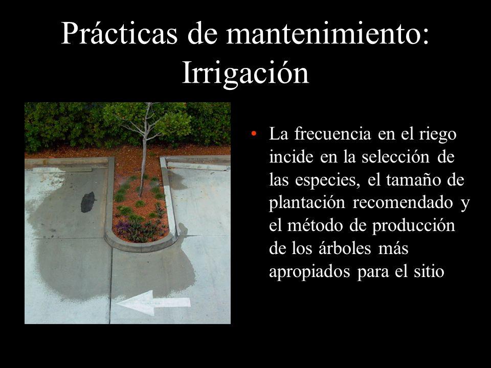 Prácticas de mantenimiento: Irrigación