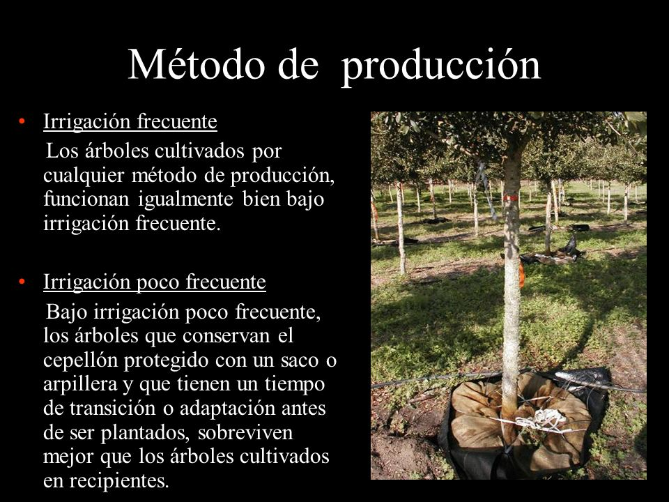 Método de producción Irrigación frecuente