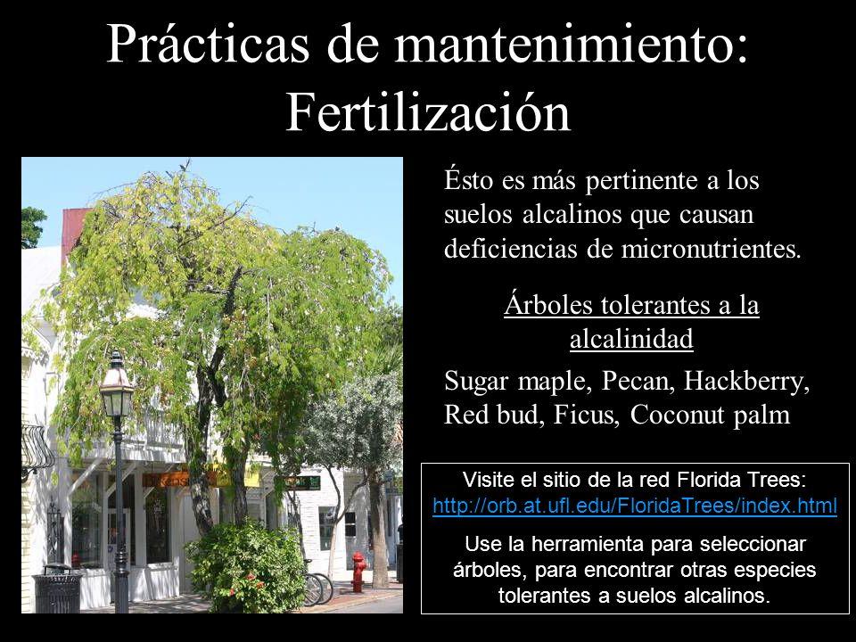Prácticas de mantenimiento: Fertilización