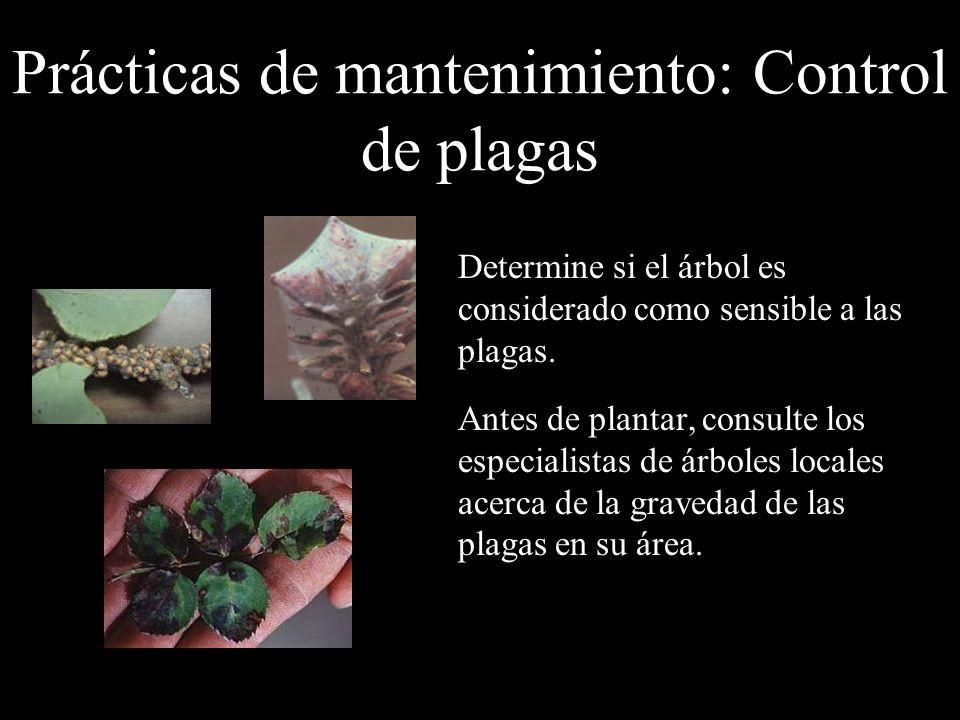 Prácticas de mantenimiento: Control de plagas