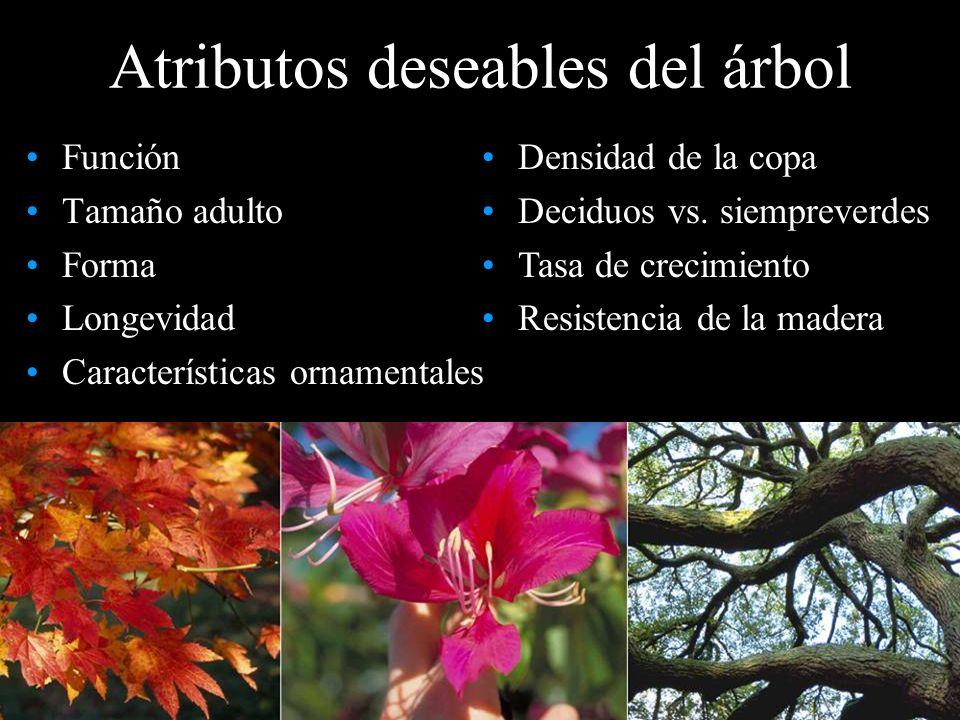 Atributos deseables del árbol