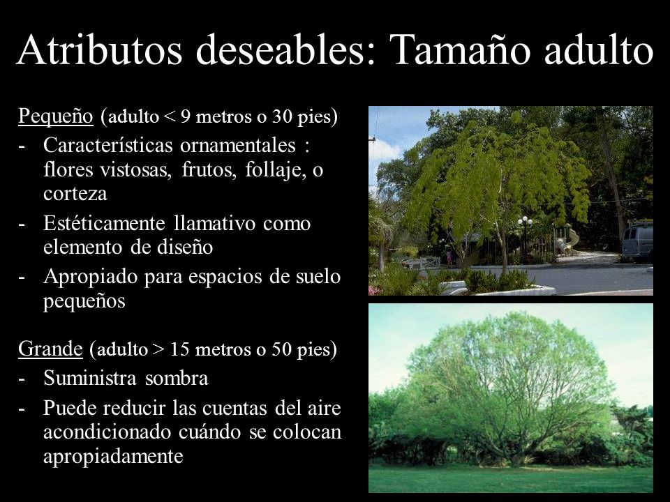 Atributos deseables: Tamaño adulto