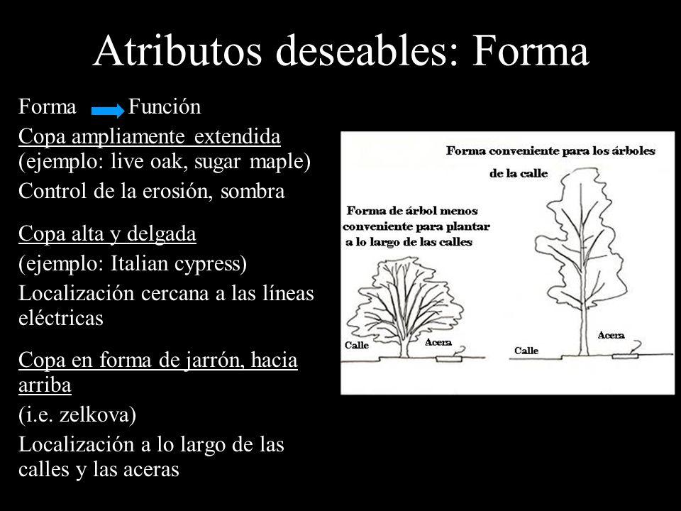 Atributos deseables: Forma