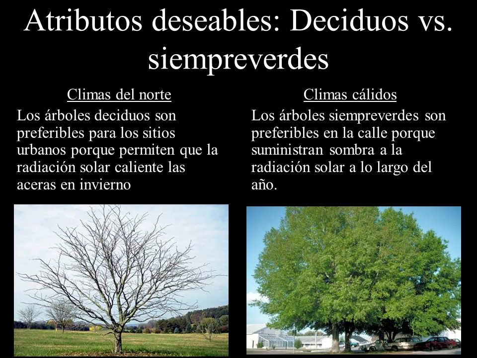 Atributos deseables: Deciduos vs. siempreverdes
