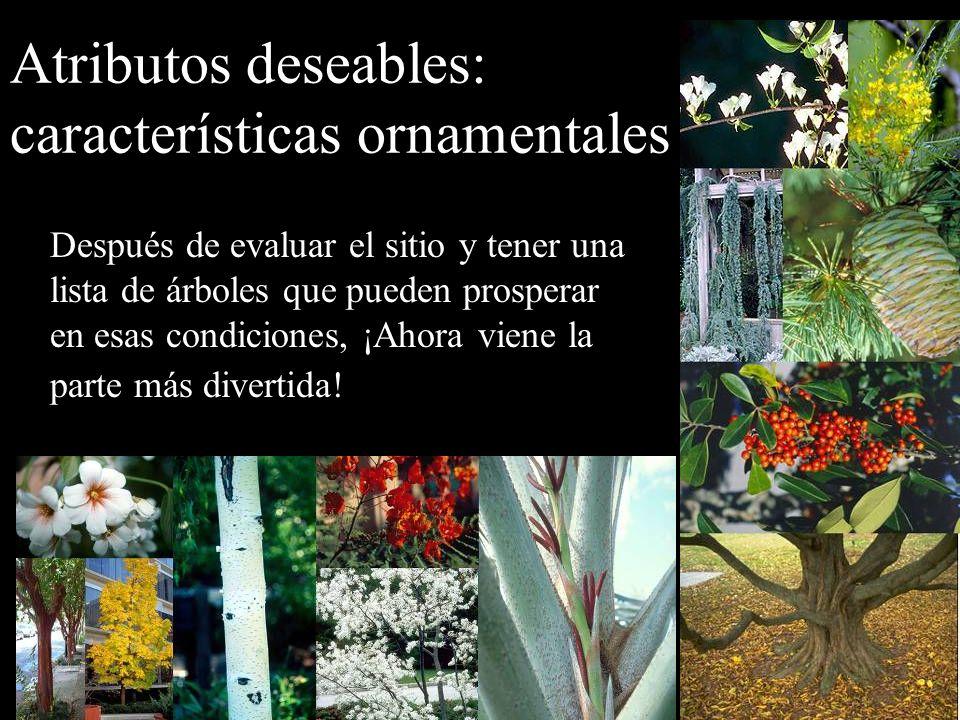 Atributos deseables: características ornamentales