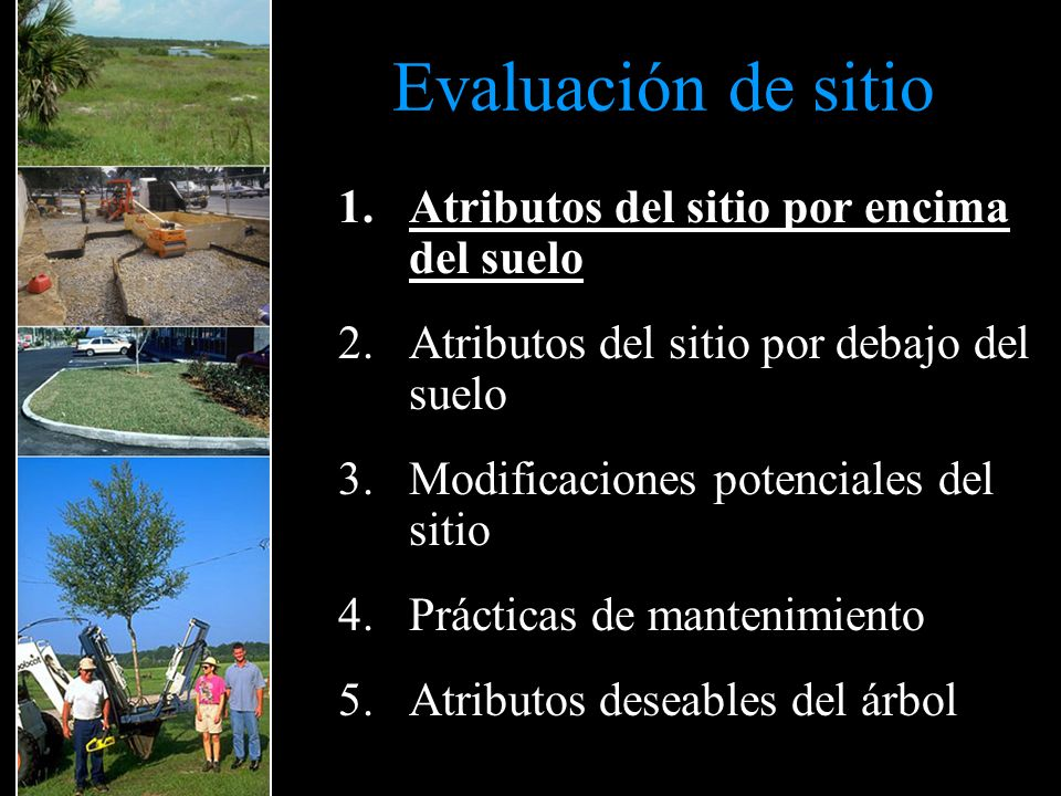 Evaluación de sitio Atributos del sitio por encima del suelo