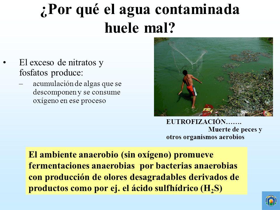 ¿Por qué el agua contaminada huele mal