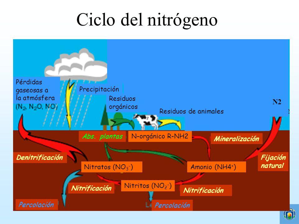 Ciclo del nitrógeno N2 N2 Combustión de combustibles fósiles