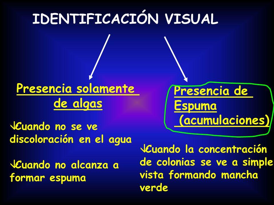 IDENTIFICACIÓN VISUAL