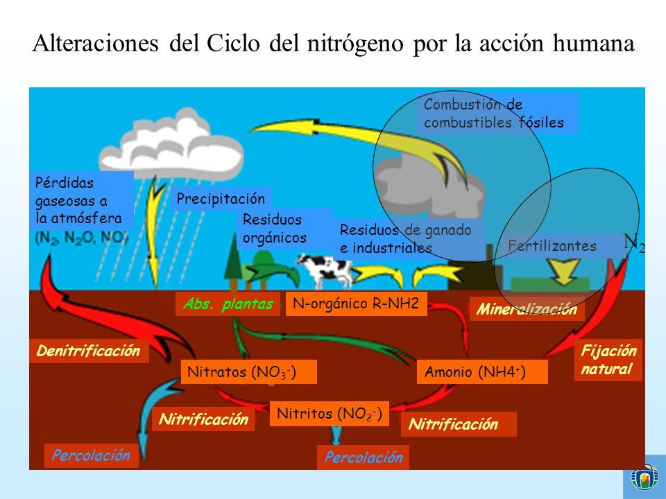 Alteraciones del Ciclo del nitrógeno por la acción humana