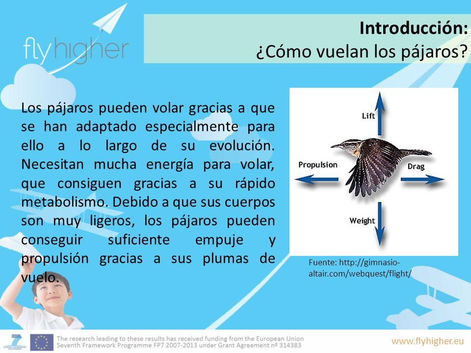 ¿Cómo vuelan los pájaros