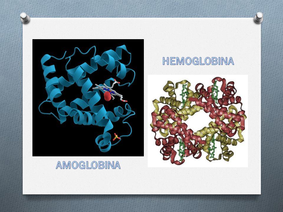 HEMOGLOBINA AMOGLOBINA