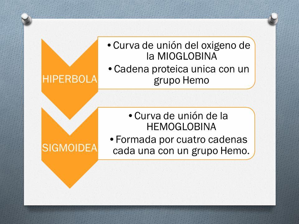 HIPERBOLA SIGMOIDEA Curva de unión del oxigeno de la MIOGLOBINA