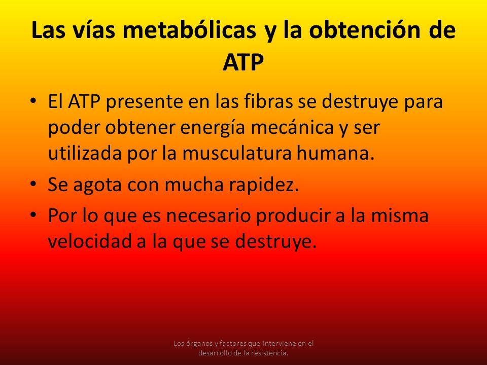 Las vías metabólicas y la obtención de ATP