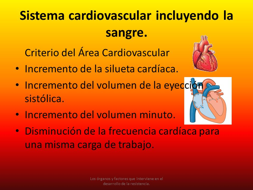 Sistema cardiovascular incluyendo la sangre.