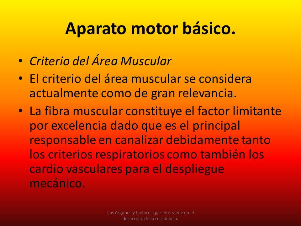 Aparato motor básico. Criterio del Área Muscular