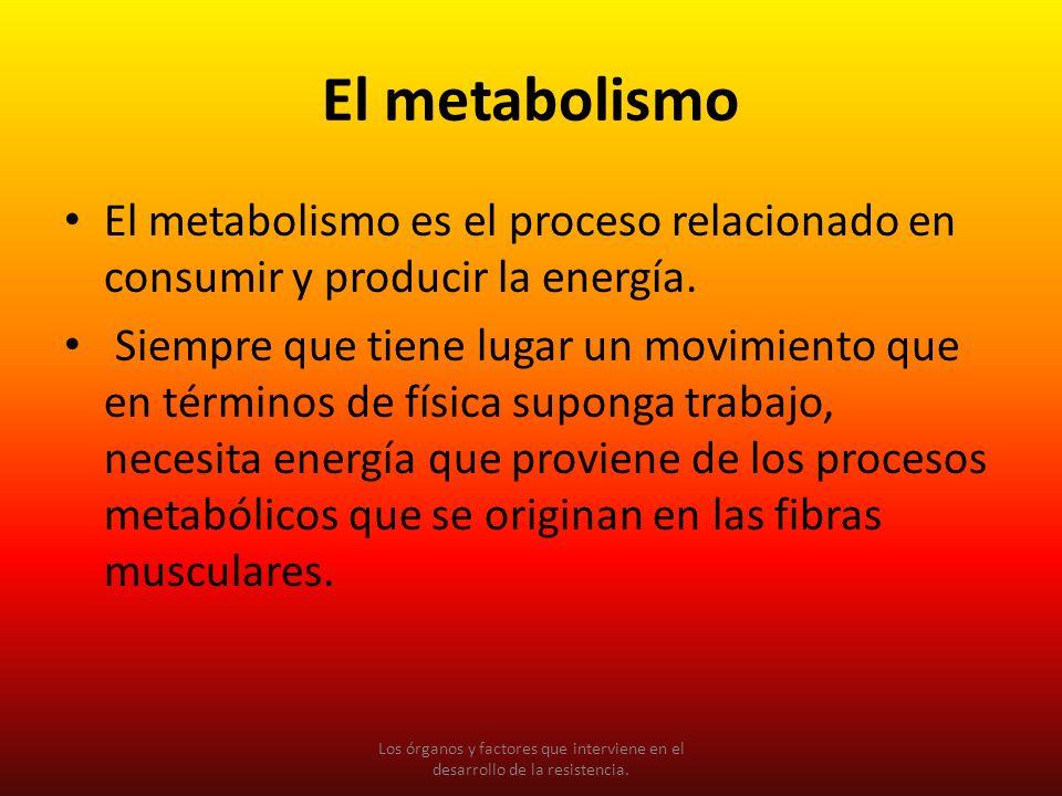 El metabolismo El metabolismo es el proceso relacionado en consumir y producir la energía.