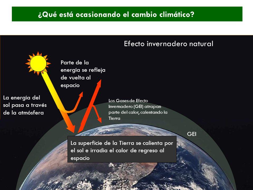 ¿Qué está ocasionando el cambio climático