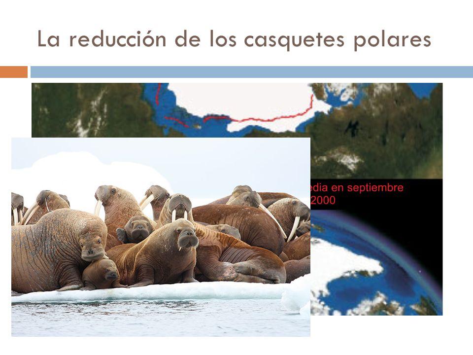 La reducción de los casquetes polares