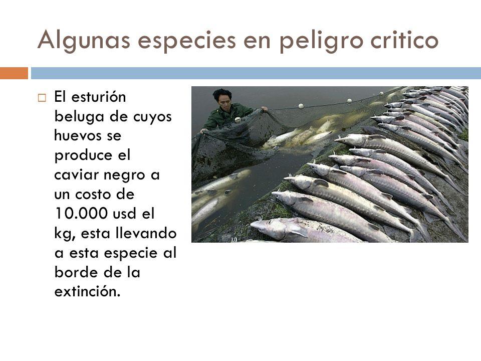 Algunas especies en peligro critico