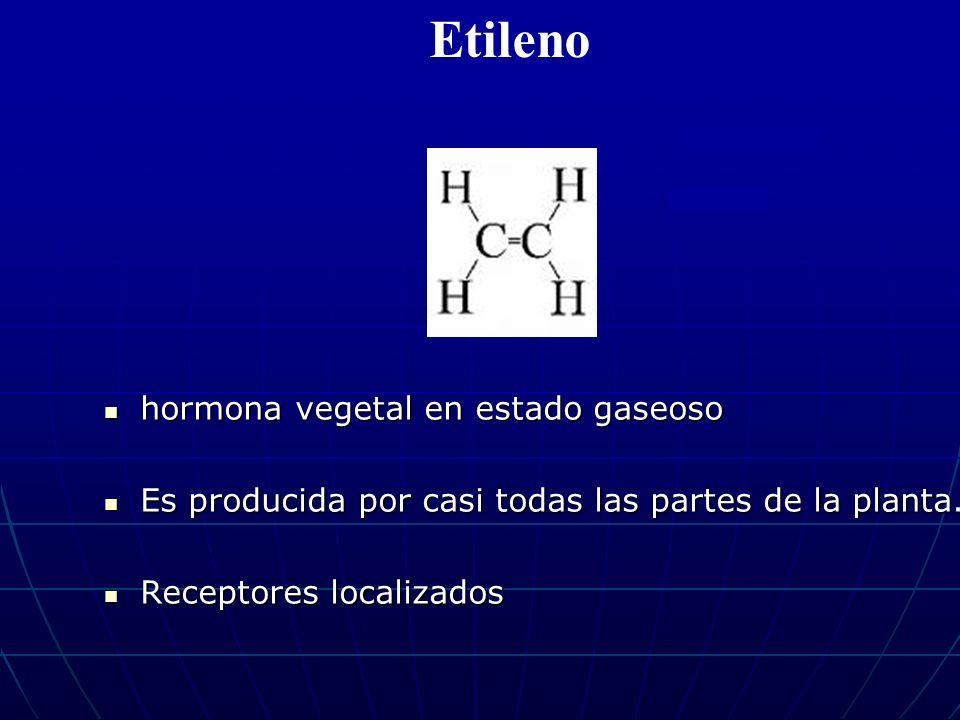 Etileno hormona vegetal en estado gaseoso
