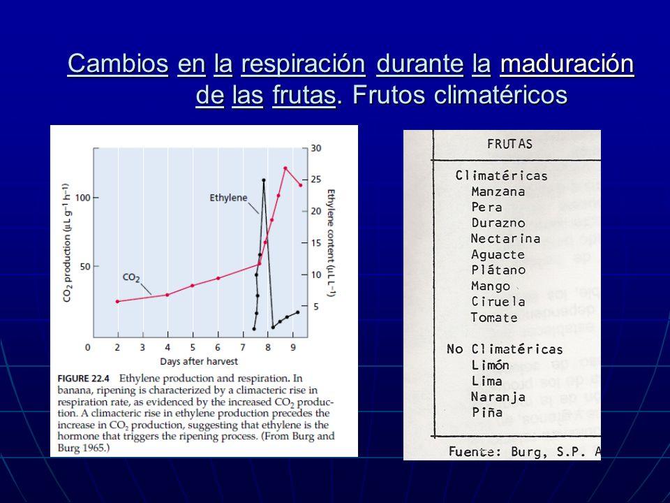 Cambios en la respiración durante la maduración de las frutas