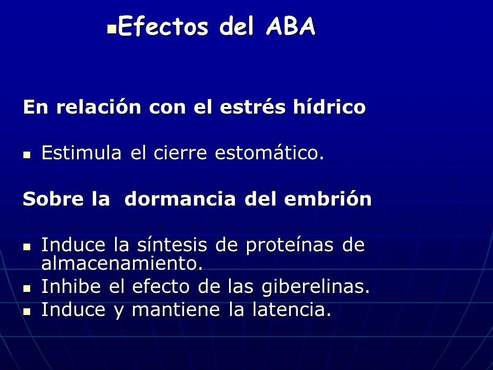 Efectos del ABA En relación con el estrés hídrico