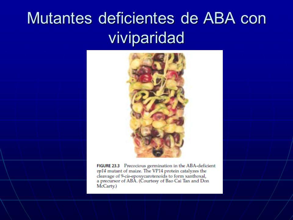 Mutantes deficientes de ABA con viviparidad
