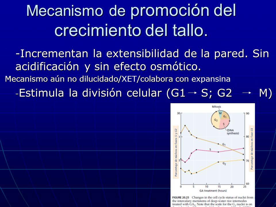 Mecanismo de promoción del crecimiento del tallo.