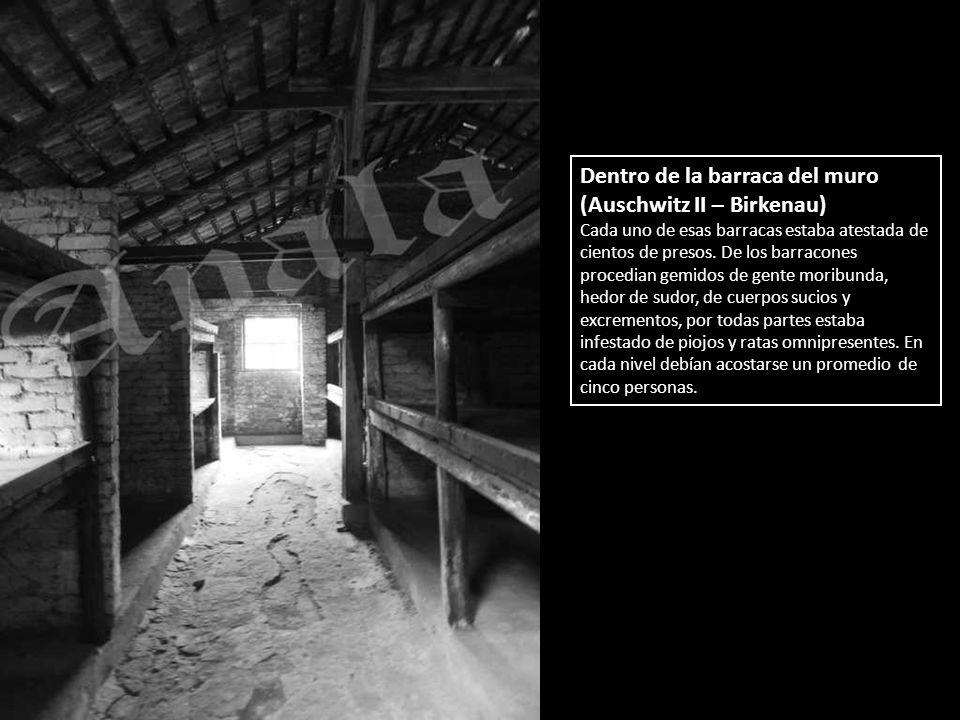 Dentro de la barraca del muro (Auschwitz II – Birkenau)