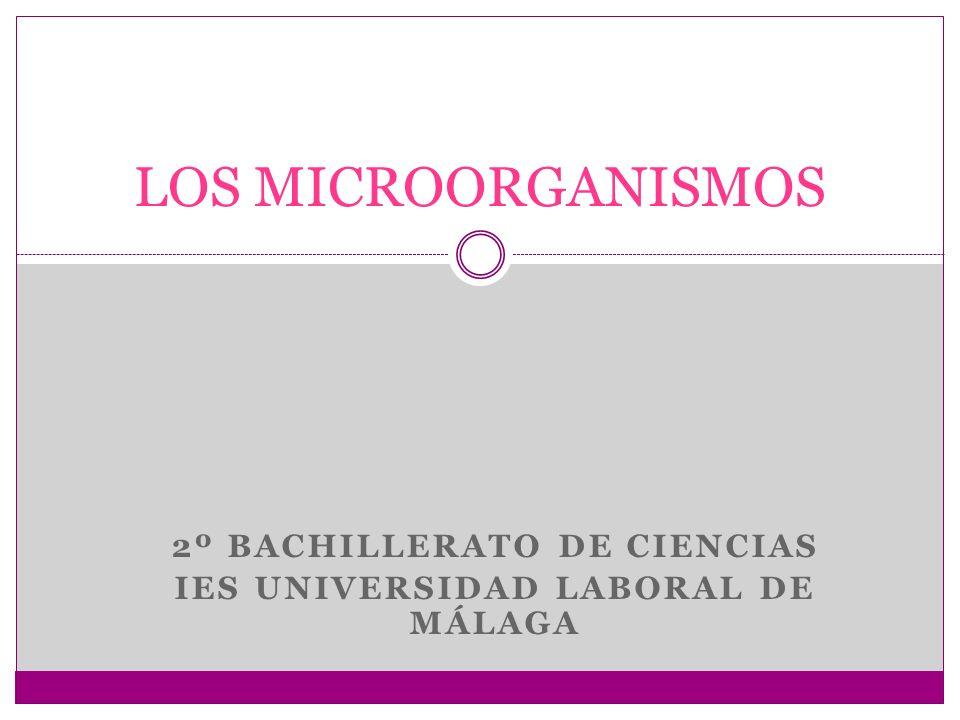 2º BACHILLERATO DE CIENCIAS IES UNIVERSIDAD LABORAL DE MÁLAGA
