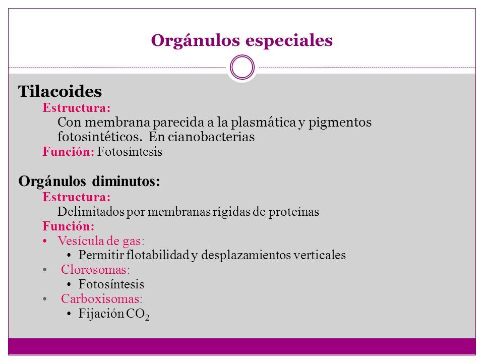 Orgánulos especiales Tilacoides Orgánulos diminutos: Estructura: