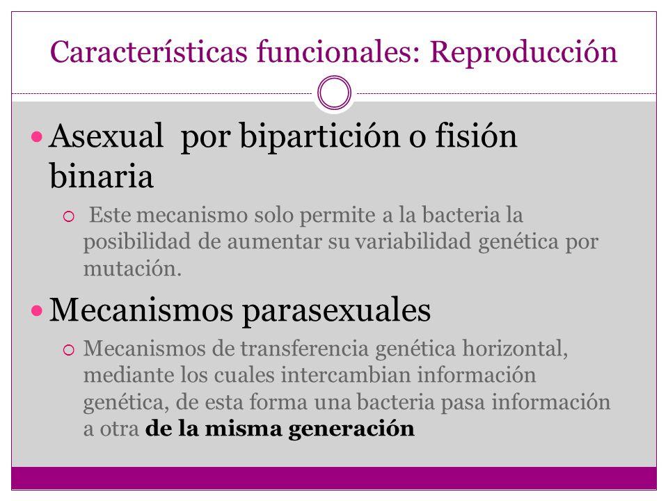 Características funcionales: Reproducción
