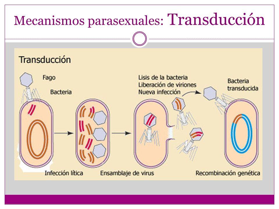 Mecanismos parasexuales: Transducción