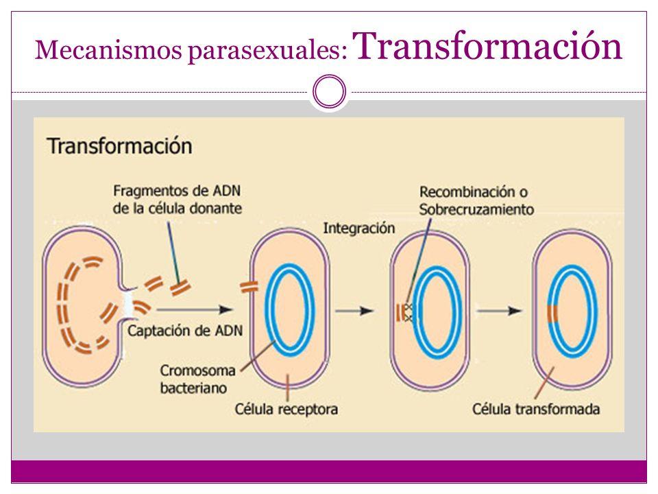 Mecanismos parasexuales: Transformación