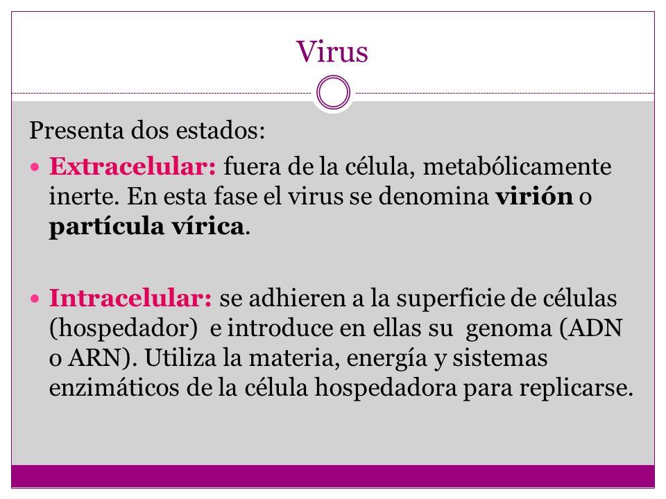 Virus Presenta dos estados: